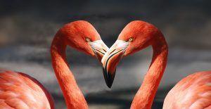 flamingo-600205_960_720 (1)